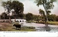 On the River Speed, Near Gow's Bridge, Guelph, Ont. Postcard